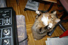 Cat_attack_SH-1!!!