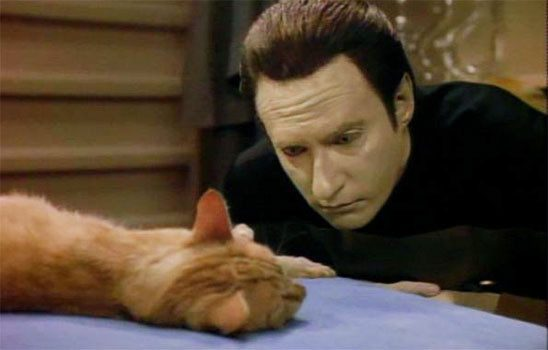 Data the android stares intently at his orange cat