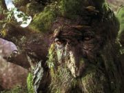 close up of an ent