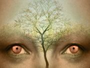 The eyes of a person with a tree overlaid on their forehead.