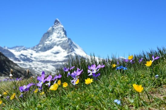 Wildflowers with a sharp peak in the background