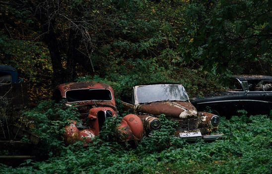 Cars covered in plants rust in the woods
