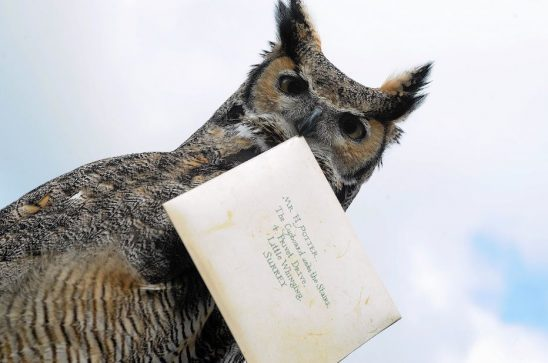 Owl holding letter to Harry Potter