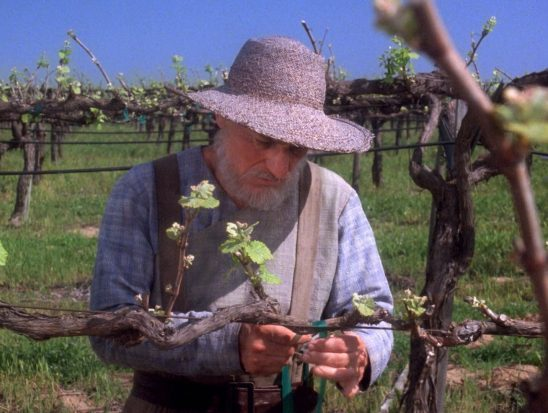 Future Picard tending his vines.